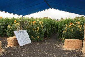 Petaluma Corn Maze Rules