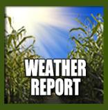 Petaluma Pumpkin Patch Weather Report