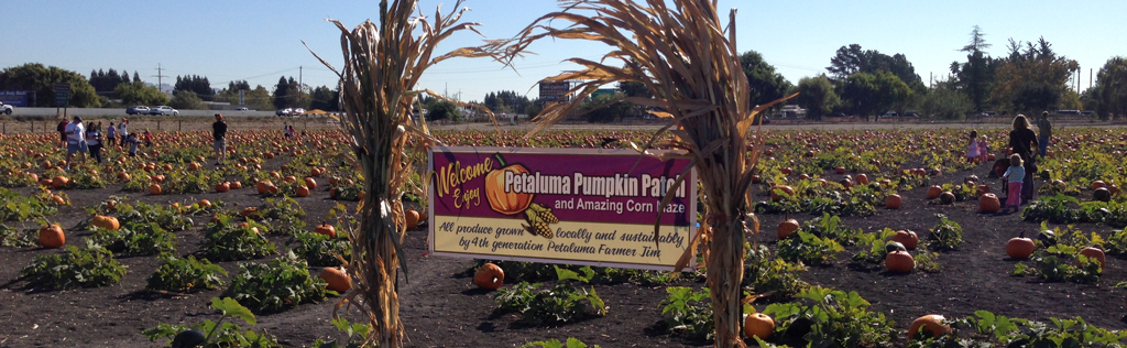 Petaluma Pumpkin Patch and Amazing Corn Maze