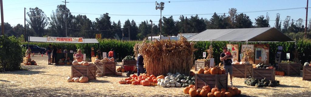 Petaluma Squash & Gourds