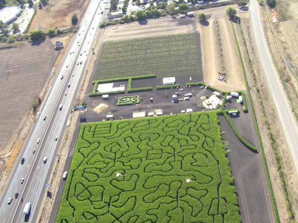 Petaluma Pumpkin Patch Amazing Corn Maze Aerial View