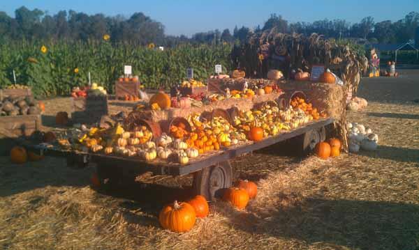 Gourds & Pumpkins