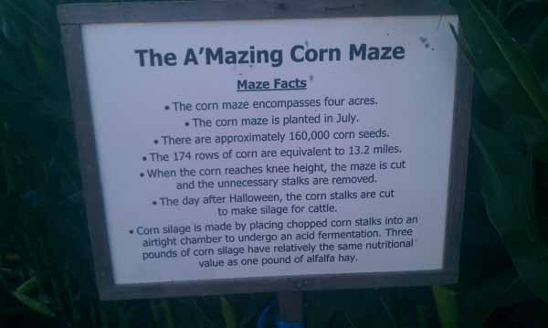 Petaluma Pumpkin Patch Amazing Corn Maze Facts
