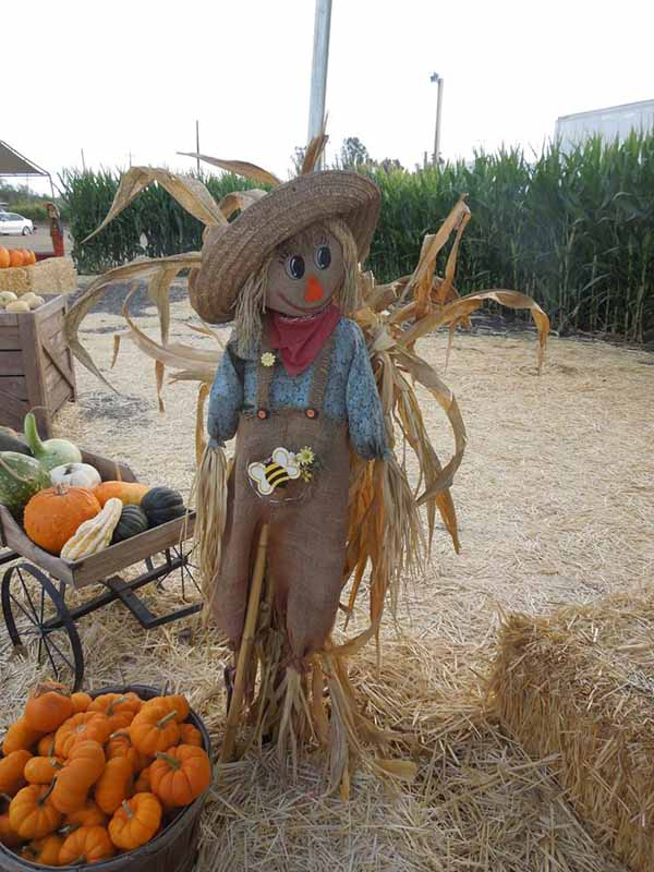 Petaluma Pumpkin Patch Scarecrow