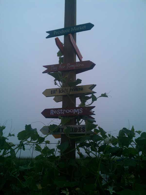 Petaluma Pumpkin Patch Signpost