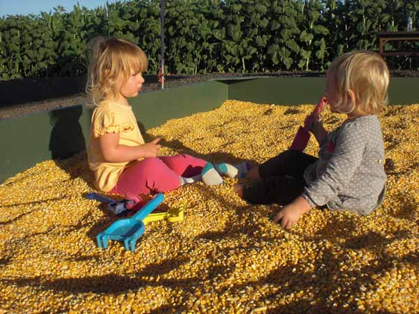 Petaluma Pumpkin Patch Corn Kernel Crawl