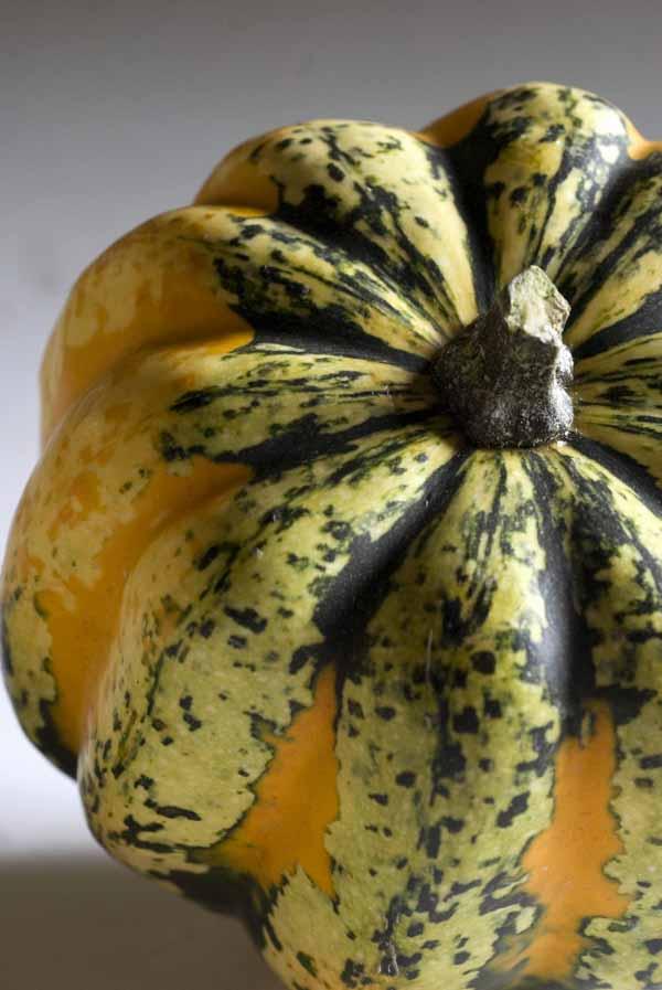 Carnival Gourd